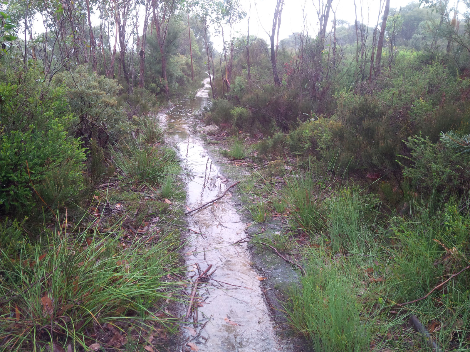 This was Telegraph Track - a little creek
